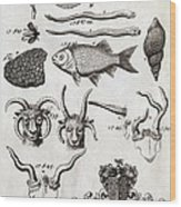 Oxfordshire Animals, 18th Century Artwork Wood Print