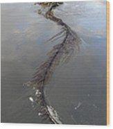 Pacific Giant Wood Print