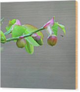 Pacific Huckleberry Wood Print by Pamela Patch