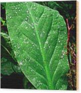 Pacific Rim National Park 15 Wood Print