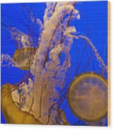 Pacific Sea Nettle Chrysaora Fuscescens Wood Print