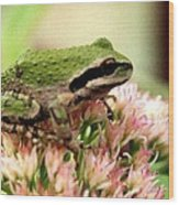 Pacific Tree Frog Wood Print by Laurel Talabere