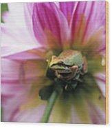 Pacific Treefrog On A Dahlia Flower Wood Print by David Nunuk