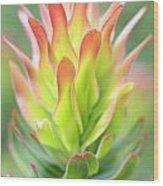 Pagoda Protea Wood Print