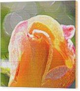Paint Daub Yellow Rose Wood Print