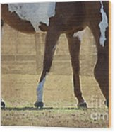 Paint Horse Wood Print by Betty LaRue