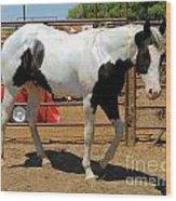 Paint Stallion - Black And White Wood Print