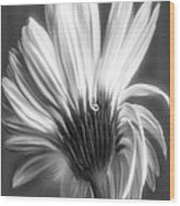 Painted Gerbera Daisy In Black And White Wood Print