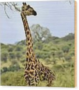 Painted Giraffe Wood Print