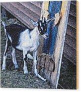 Painted Goat Wood Print
