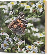 Painted Lady - Surrounded In White Wood Print