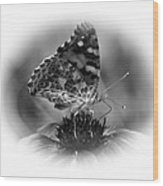 Painted Lady 1 Wood Print