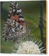 Painted Lady Butterfly Din049 Wood Print