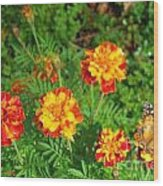 Painted Lady Butterfly In The Marigolds  Wood Print