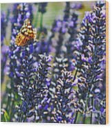 Painted Lady Butterfly On Lavender Flowers Wood Print