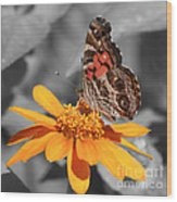 Painted Lady Butterfly On Zinnia Wood Print