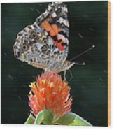 Painted Lady In A Shower Wood Print