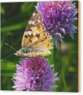 Painted Lady -vanessa Cardu Wood Print by Bill Tiepelman