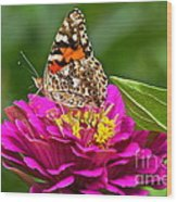 Painted Lady With Zinnia Wood Print