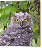 Painted Owl Wood Print