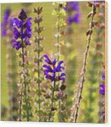 Painted Purple Sage Salvia Wood Print