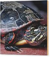 Painted Turtle Michigan Wood Print