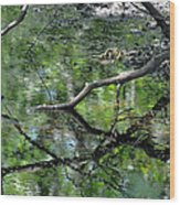Painting Of The Branches Wood Print