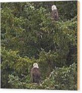 Pair Of Bald Eagles Wood Print