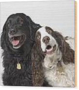 Pair Of Canine Friends Wood Print