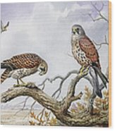 Pair Of Kestrels Wood Print