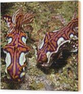 Pair Of Miamira Magnifica Nudibranch Wood Print