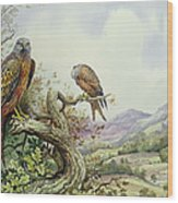 Pair Of Red Kites In An Oak Tree Wood Print by Carl Donner