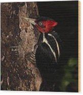Pale-billed Woodpecker Wood Print