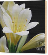 Pale Yellow Clivia Miniata Flowers Wood Print