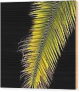 Palm Frond Against Black Wood Print