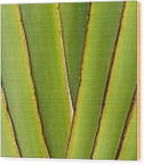 Palm Frond Detail Wood Print