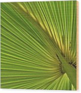 Palm Leaf II Wood Print