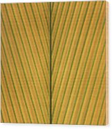 Palm Leaf Showing Midrib And Veination Wood Print