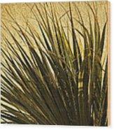Palm Leaves 1 Wood Print