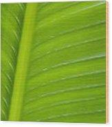 Palm Pattern Wood Print