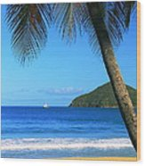 Palm Shaded Island Beach  Wood Print