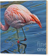 Palm Springs Flamingo Wood Print