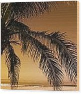 Palm Tree And Sunset In Mexico Wood Print