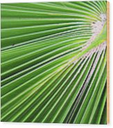Palm Tree Frond Wood Print