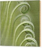 Palm Tree Fronds Wood Print