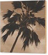 Palm Tree Leeward Oahu Wood Print