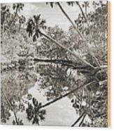 Palm Tree Reflections Wood Print