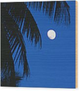 Palm Tree Silhouetted Against The Sky Wood Print