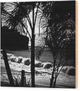 Palm Tree Silouette Wood Print