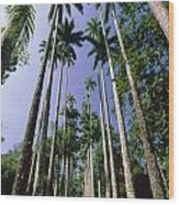 Palm Trees Against The Sky Wood Print